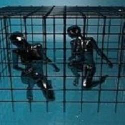 anchors captivity