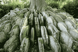 The Hardy Tree