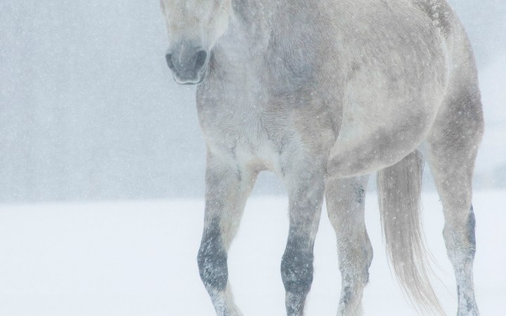 White horse blizzard photography