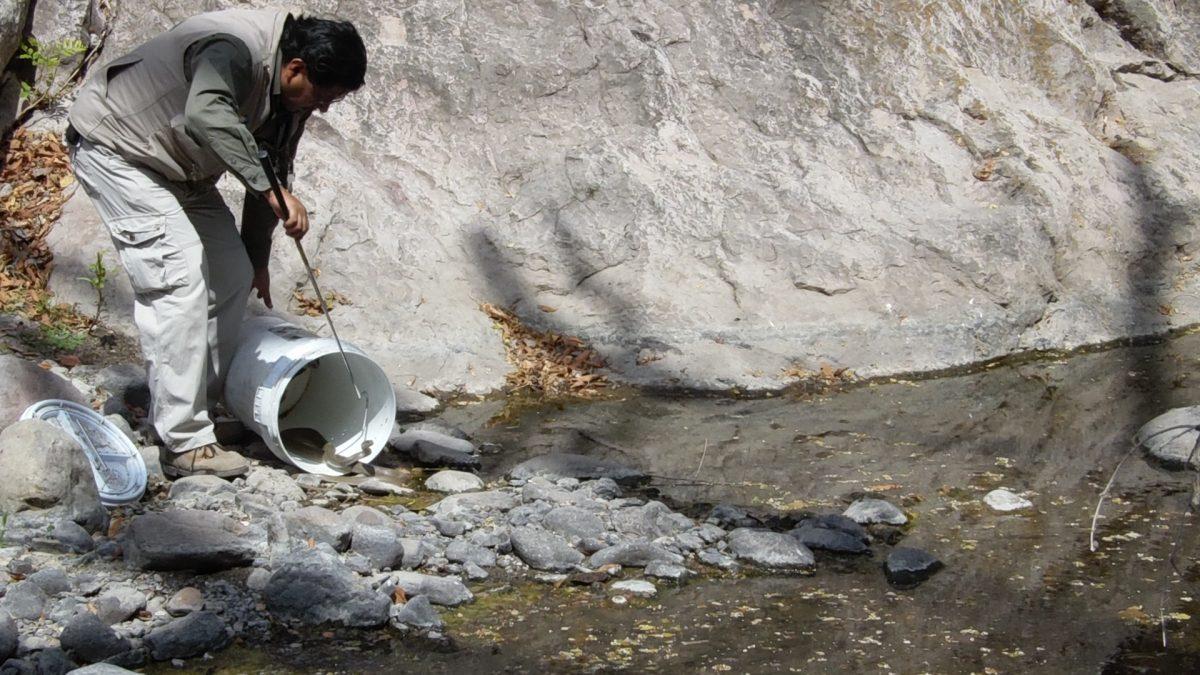 Liberan ejemplares de vida silvestre en Morelos