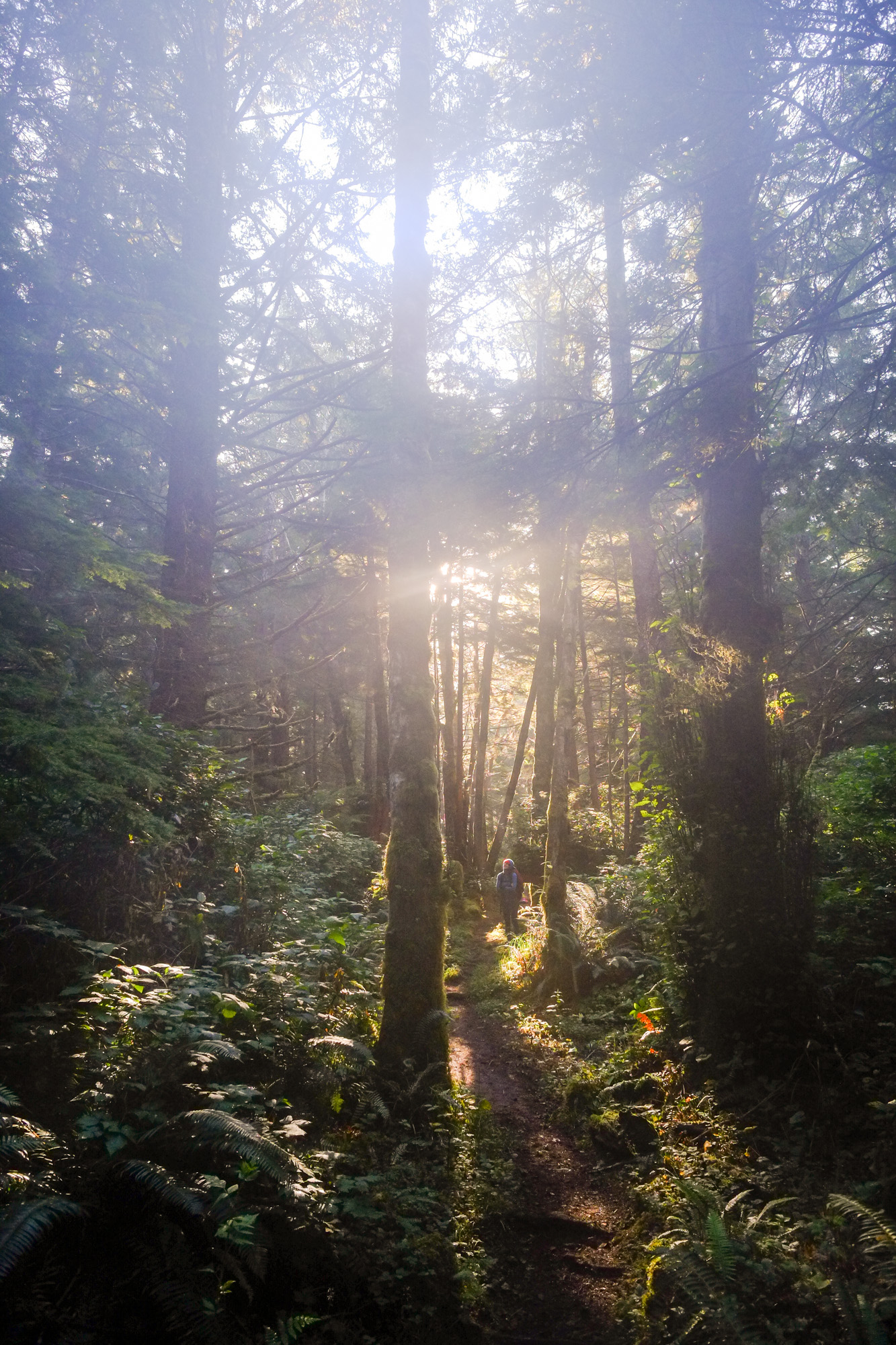 The forest is damp on the Cape Scott trail.