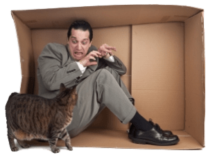 Fear of cats hypnotherapy