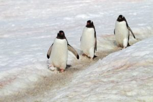 Fear of walking on ice Hypnotherapy