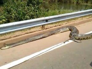 Il serpente morto in autostrada.