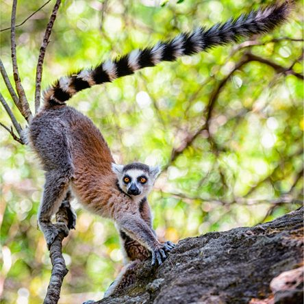 Madagaskar [2016]