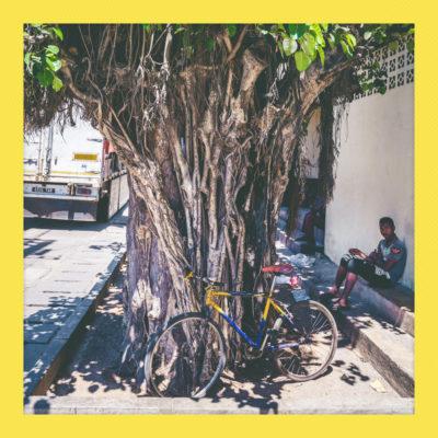 Madagascar_NikonD600_0197_20161007_polaroid