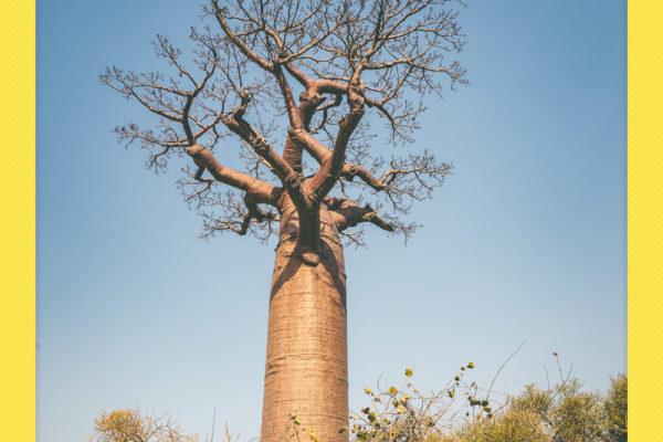 Madagascar_NikonD600_0301_20161008_polaroid
