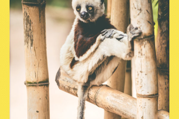 Madagascar_NikonD600_1648_20161022_polaroid