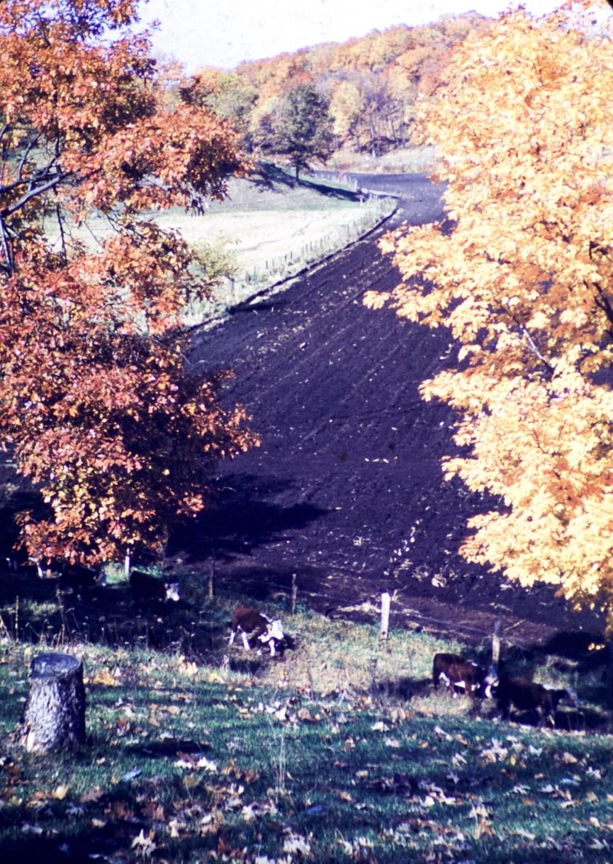 Autumn - Autumn Pastoral
