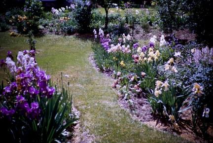 From Our Garden - Iris Garden