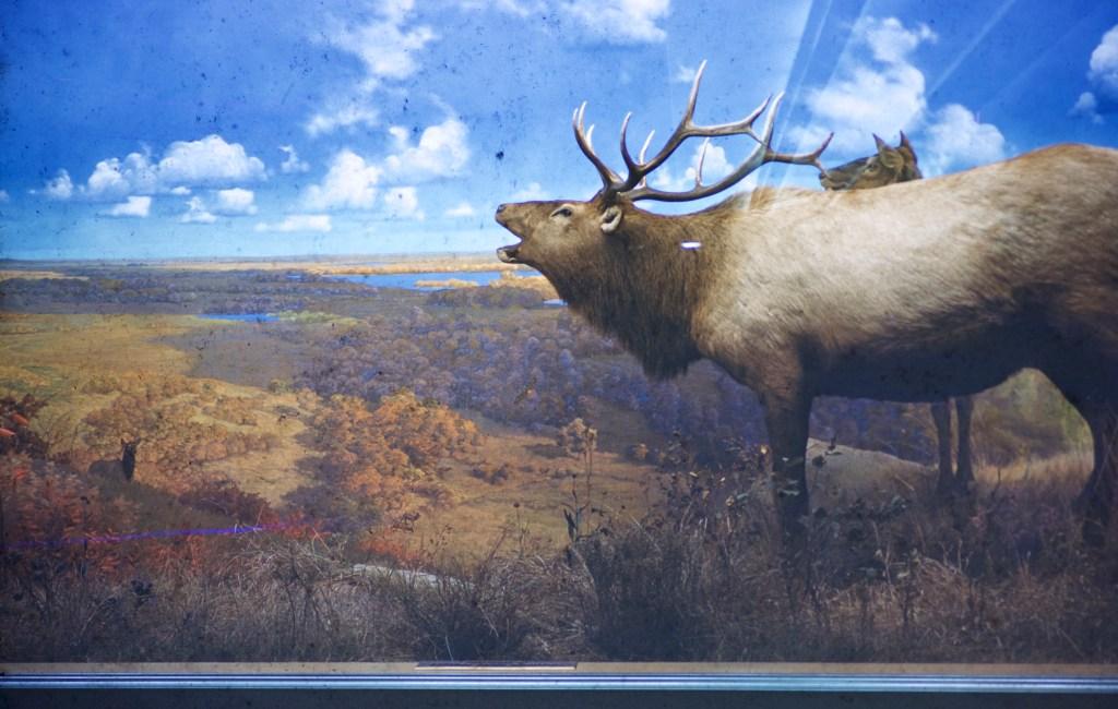 Museum Of Natural History, University Of Minnesota