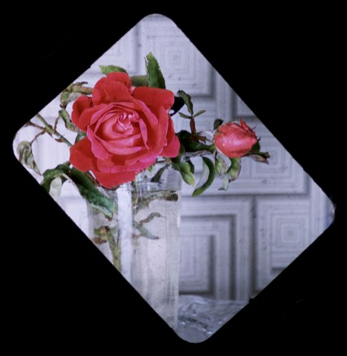 From Our Garden - Rose Masque