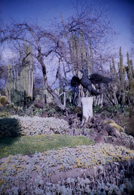 Huntington Library and Art Gallery - Cacti Garden