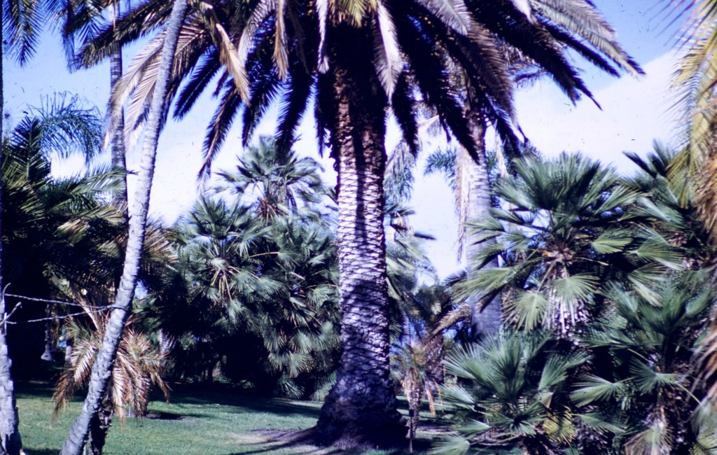Huntington Library and Art Gallery – Palm Garden