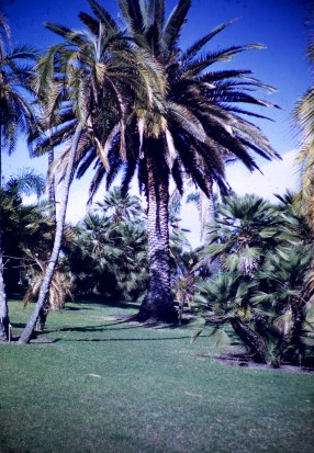 Huntington Library and Art Gallery - Palm Garden