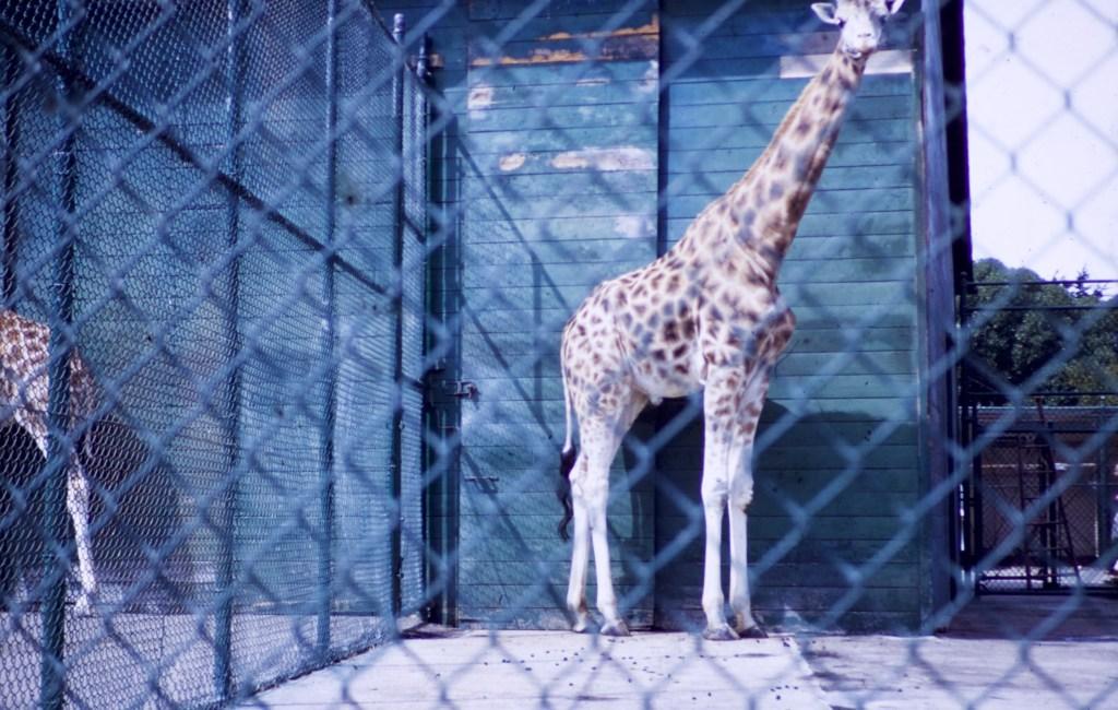 """San Francisco – """"Frisco"""" – Fleischhacker Zoo"""