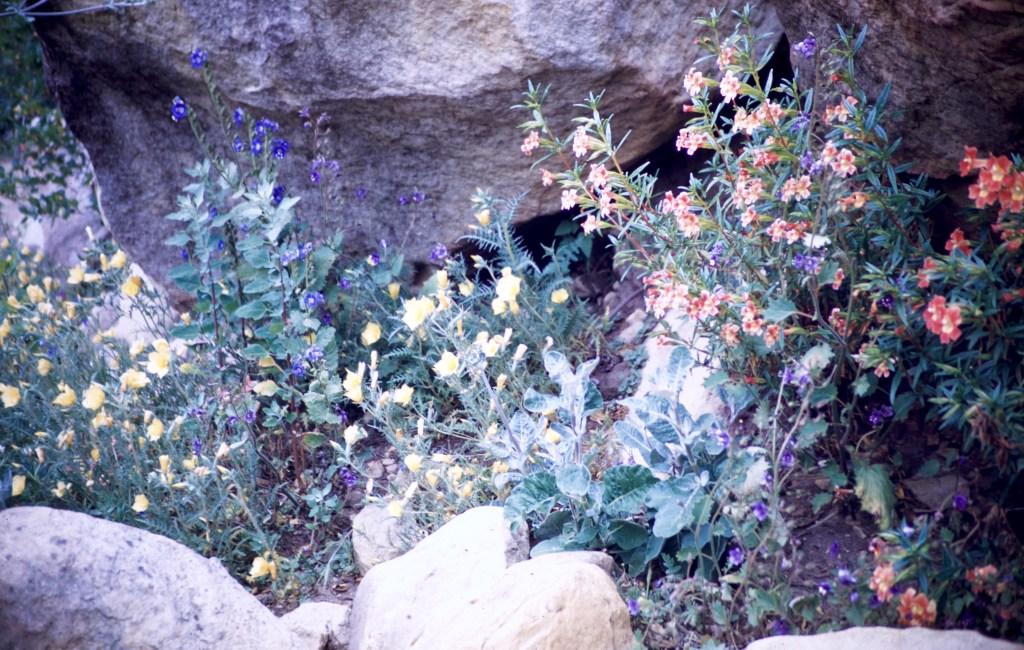 Santa Barbara – Botanical Gardens