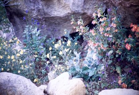 Santa Barbara - Botanical Gardens