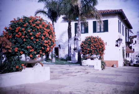 Santa Barbara - Geraniums - El Presidio