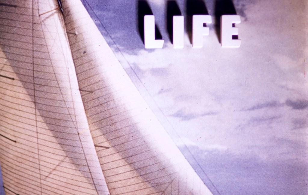 Title Cards – Marine Life