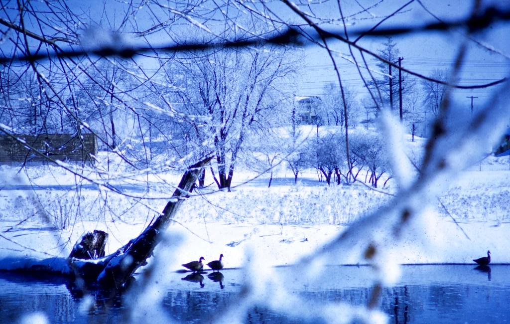 Winter – Thru the fence
