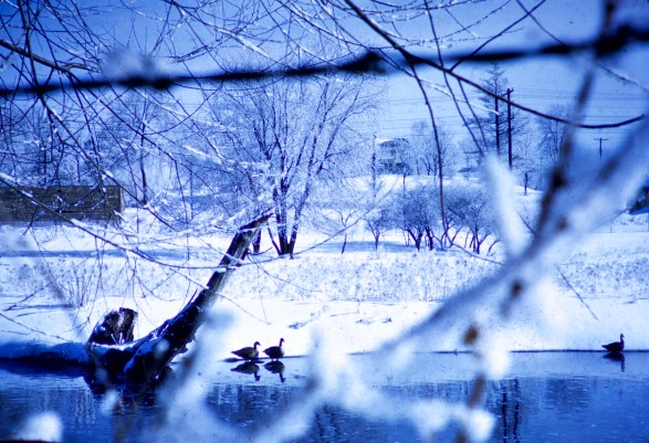 Winter - Thru the fence