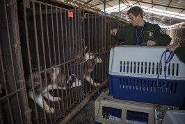 Letter: Please Condemn the Horrific Torture and Consumption of Dogs in Sangju