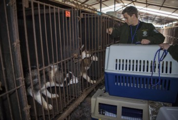 My View: Council Needs to Take Action on Sister City Issue Regarding Treatment of Dogs in South Korea