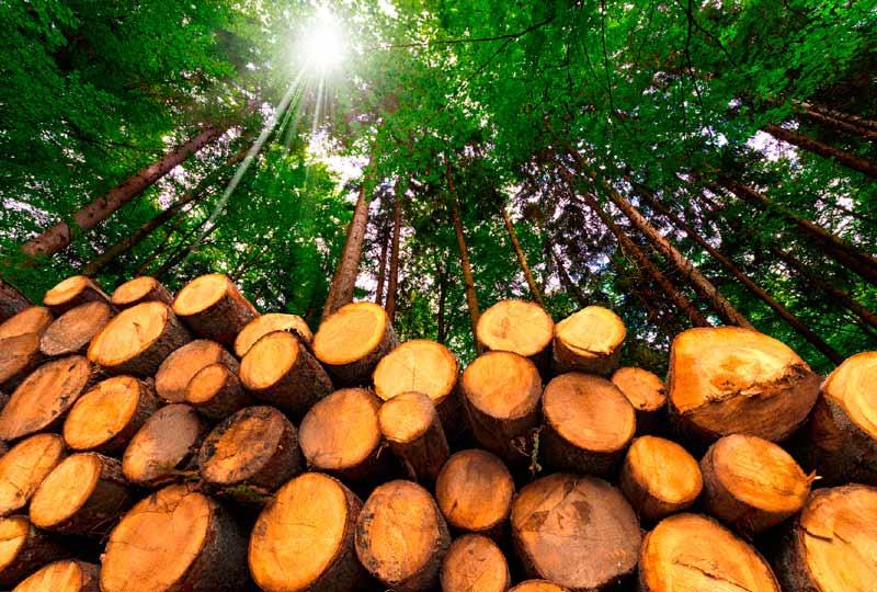 ¿La biomasa es un recurso natural inagotable?