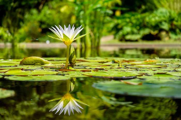 Plantas-acuáticas-para-producir-bioetanol-y-limpiar-el-agua