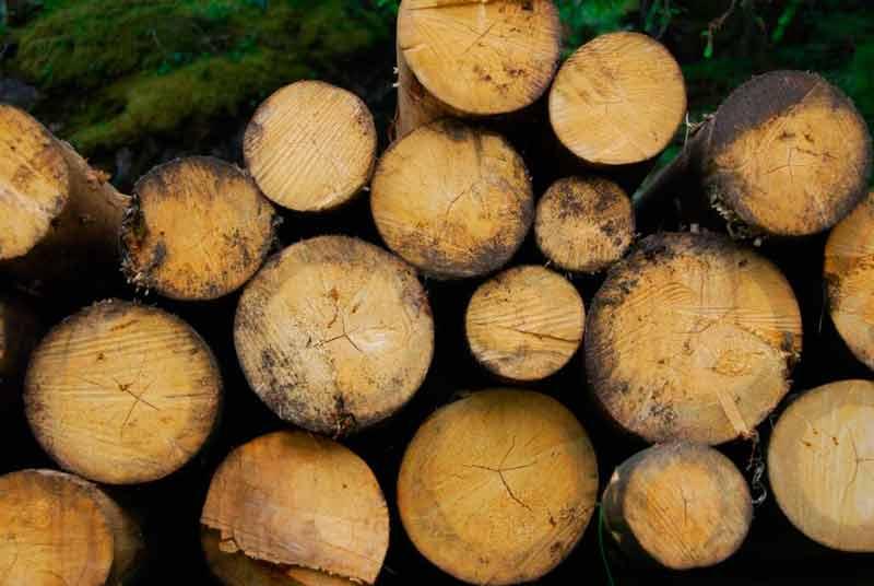 La-biomasa,-no-es-una-energía-renovable