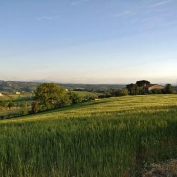 Classic Tuscan landscape