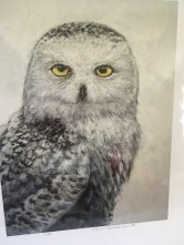 """Snowy"" owl painting by Paul Fletcher"