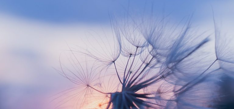 Breathing tip helps reduce anxiety | dandelion clock |www.dawnquest.co.uk