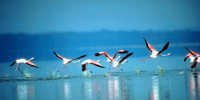 How to Keep Your New Year's Resolutions   To begin, begin... flamingos taking flight  www.dawnquest.co.uk