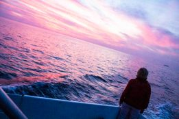 Stunning pink sunset on the whale watching boat