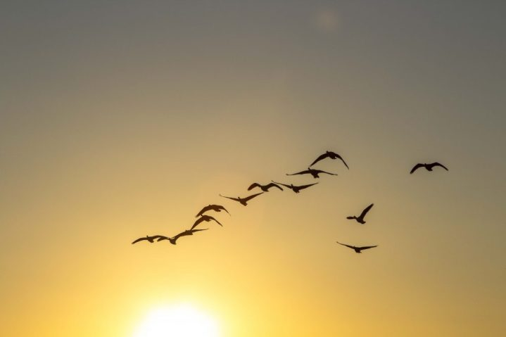 Bird Life - Cherry Beach