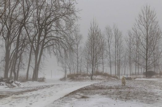 After the thaw - mist and fog at Ashbridges Bay
