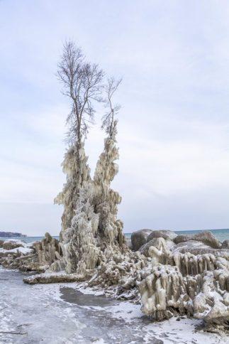 Kind & Queen Trees, Ashbridges Bay