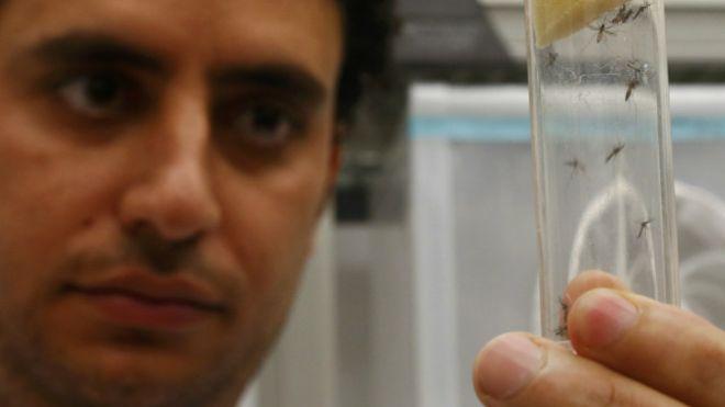 Entenda a tecnologia radioativa que promete conter o Aedes aegypti