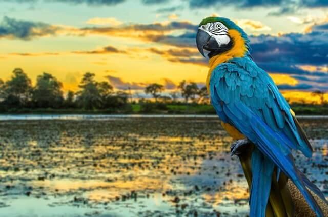 Turismo: FIT Pantanal começa nesta quinta-feira (20) com programação variada