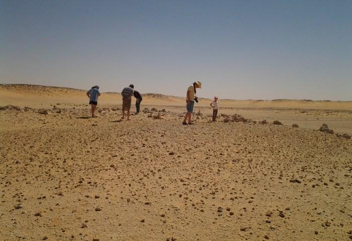 Sharks in the Desert