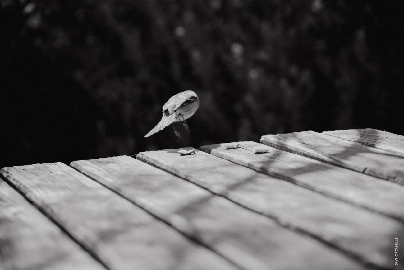 daysofcamille-parc-ornithologique-camargue-pontdegau29