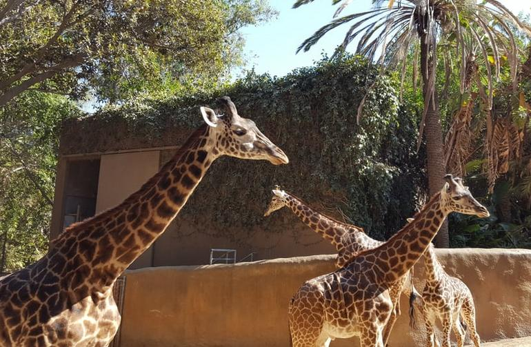 Los Angeles Zoo Kids Birthday Parties Griffith Park