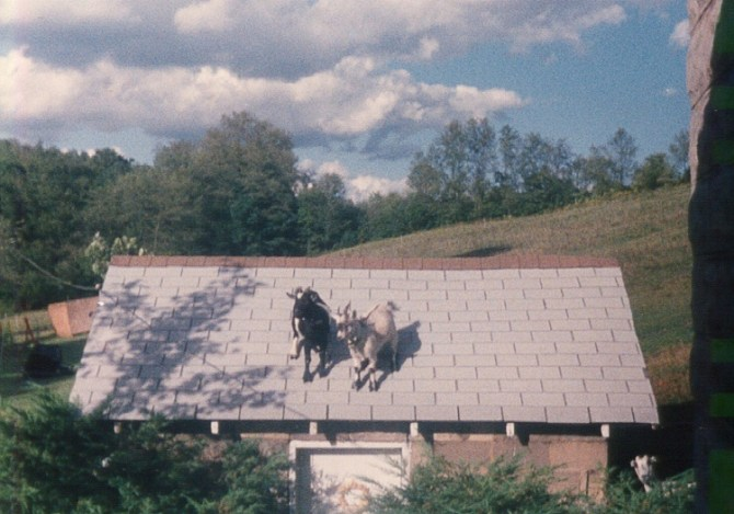 Timmy and Jasper on the Spring House Roof