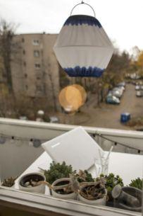 ...a i promatrati susjede ;) / foto: Borko Vukosav