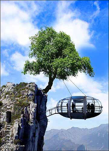 tree-suspended-cliff-house