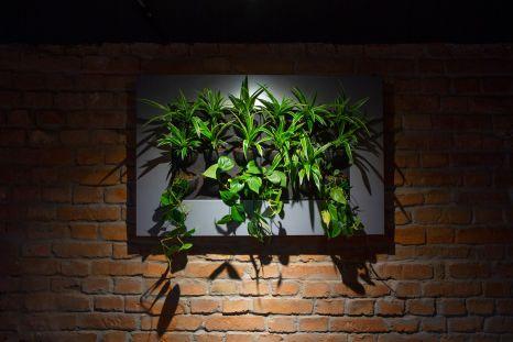 biljke-ducan-hortiart-home-zvonimirova (7)