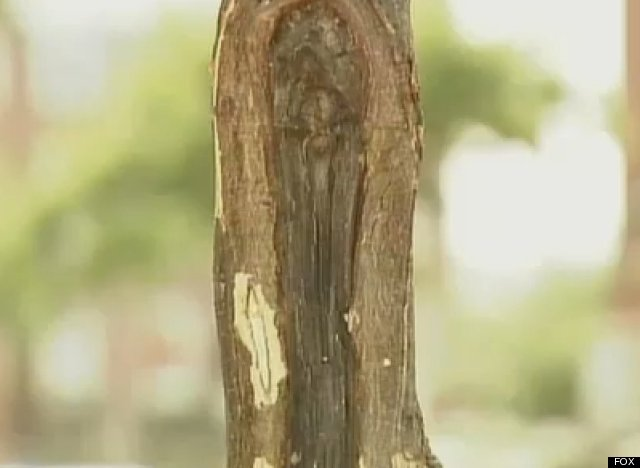Virgin Mary Tree Trunk: Are You A Tree Believer?