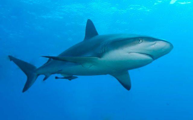 Shark Saves Man from Near Death After Five Weeks Adrift